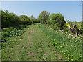 TL4673 : Fen Side byway by Hugh Venables