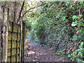 SJ9190 : Lower Bredbury, Path Behind Sargent Road by David Dixon