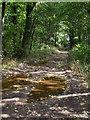 SE2805 : Woodland footpath near Silkstone by Samantha Waddington