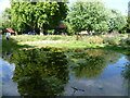 TQ3176 : Pond in the Nature Conservation Area, Myatts Fields Park by Ian Yarham