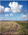 SD4550 : Stubble field on Cockerham Moss : Week 35