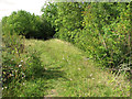TF7511 : Path along disused railway embankment, Narborough by Evelyn Simak