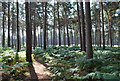 TL1240 : Rowney Warren Woods Near Chicksands by Martin
