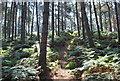 TL1140 : Mountain Bike Track Rowney Warren Woods Near Chicksands by Martin