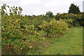TM4297 : Hillfield Orchard by Ashley Dace
