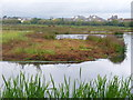 TQ2376 : Water Meadows, Barnes by Colin Smith