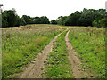 TF6717 : Footpath no longer to Ferrettshill Plantation, Middleton by Evelyn Simak