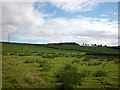 NY6864 : Rough pasture by Jock's Hill above Haltwhistle by Karl and Ali