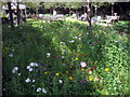 TQ3078 : Wild flowers in garden at rear of Tate Britain by PAUL FARMER