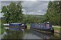 ST7866 : Kennet & Avon Canal, near Bathampton by Stephen McKay