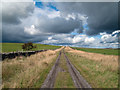 NZ0745 : Farm road north from Oxen Law : Week 38