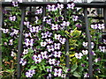 C1611 : Violas behind bars by Willie Duffin