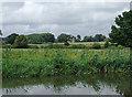 SJ9822 : Reedbeds and farmland near Tixall, Staffordshire by Roger  Kidd