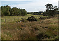 NZ0845 : Farmland and trees adjacent to Black Burn by Trevor Littlewood