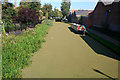 SK4833 : Azolla covers the Erewash Canal by David Lally
