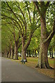TQ2475 : London plane trees, Wandsworth Park by Philip Halling