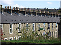 SD8432 : Burnley - chimney pots on Hobart Street : Week 39