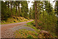 SD3394 : Grizedale Forest Park Track and Trail by Martin