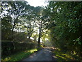 SK2367 : Sun shining through trees, Coombs Road, Bakewell by Peter Barr