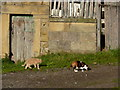 SK2367 : Two moggies in the sun by Peter Barr