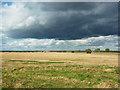 TF2753 : Lincolnshire Fens : Week 40