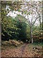 TQ4065 : Path in West Wickham Common (2) by David Anstiss