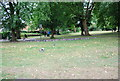 SP0983 : Pigeons, Sparkhill Park by N Chadwick