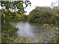 TM3173 : Pond off Heveningham Road by Adrian Cable