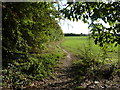 TR0261 : Footpath leading from Faversham to Goodnestone by pam fray