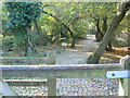 SU9972 : Granite pathway to the J F Kennedy memorial at Runnymede by Eirian Evans