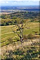 SO9540 : Dead Tree, Bredon Hill by Paul Buckingham