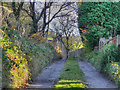 SE0005 : Abels Lane, Uppermill by David Dixon