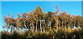 SU7079 : Seasonal Colours, Rudgings Plantation by Des Blenkinsopp