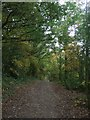 TQ4792 : Footpath around Dog Kennel Hill Hainault Forest Country Park by Richard Hoare