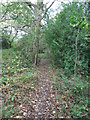 SE2009 : Woodland footpath near Shepley by Samantha Waddington