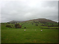SD6392 : Sheep pasture in the Lune Valley near Sedbergh by Karl and Ali