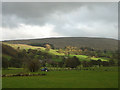 SD6788 : Lower Dentdale pastures and Rise Hill by Karl and Ali