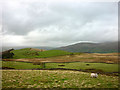 SD6789 : Pastures above lower Dentdale by Karl and Ali