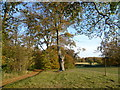 TL4953 : Wandlebury Country Park in autumn by Ian Yarham