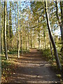 TL4953 : Path in Wandlebury Country Park by Ian Yarham