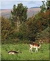 SX5160 : Deer, Estover by Derek Harper