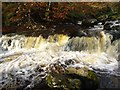 NS6179 : Campsie Glen, Lady's Linn [4] by Robert Murray