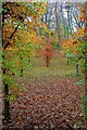 SK2673 : Autumnal Woodland by Mick Garratt