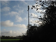 SJ6670 : Mobile phone mast adjacent to the A533 by Dr Duncan Pepper