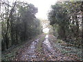 SJ6767 : A muddy farm track through woodland by Dr Duncan Pepper