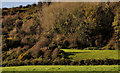D4000 : Wooded hillside near Glynn by Albert Bridge