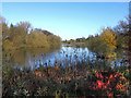 SJ9284 : Poynton Lake by David Dixon