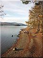 NY2620 : Walking by Derwent Water : Week 46