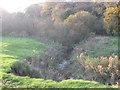 SJ6562 : Ash Brook & Primrose Hill Woods by Dr Duncan Pepper