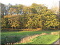 SJ6562 : Primrose Hill Woods by Dr Duncan Pepper